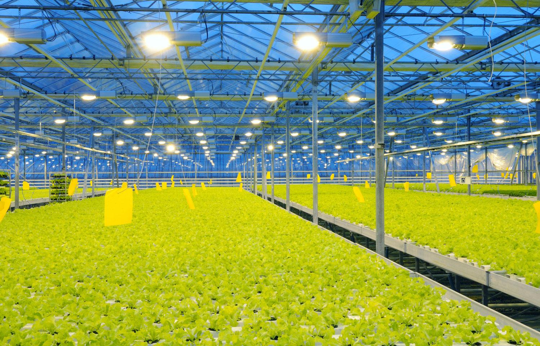 Iluminación para invernaderos - LEDiL